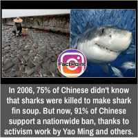 did you know fact point , education amazing dyk unknown facts daily facts💯 didyouknow follow follow4follow f4f factpoint instafact awesome world worldfacts like like4ike tag friends Don't forget to tag your friends 🤘: Fact Point  In 2006, 75% of Chinese didn't know  that sharks were killed to make shark  fin soup. But now, 91% of Chinese  support a nationwide ban, thanks to  activism work by Yao Ming and others. did you know fact point , education amazing dyk unknown facts daily facts💯 didyouknow follow follow4follow f4f factpoint instafact awesome world worldfacts like like4ike tag friends Don't forget to tag your friends 🤘