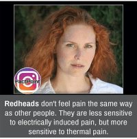 Memes, 🤖, and Southpark: Fact Point  Redheads don't feel pain the same way  as other people. They are less sensitive  to electrically induced pain, but more  sensitive to thermal pain. 'Gingers have no soul.' ~ EricCartman - - - fact didyouknow randomfact horror creepy scary southpark