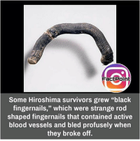 """Facts, Friends, and Memes: Fact Point  Some Hiroshima survivors grew """"black  fingernails,"""" which were strange rod  shaped fingernails that contained active  blood vessels and bled profusely when  they broke off. did you know fact point , education amazing dyk unknown facts daily facts💯 didyouknow follow follow4follow earth science commonsense f4f factpoint instafact awesome world worldfacts like like4ike tag friends Don't forget to tag your friends 👍"""