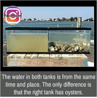 Facts, Friends, and Memes: Fact Point  The water in both tanks is from the same  time and place. The only difference is  that the right tank has oysters. Follow our page for more Facts 😇 Don't forget to tag your friends 💖