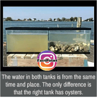 Memes, 🤖, and Tank: Fact Point  The water in both tanks is from the same  time and place. The only difference is  that the right tank has oysters.