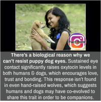 Memes, 🤖, and Page: Fact Point  There's a biological reason why we  can't resist puppy dog eyes. Sustained eye  contact significantly raises oxytocin levels in  both humans dogs, which encourages love  trust and bonding. This response isn't found  in even hand-raised Wolves, which suggests  humans and dogs may have co-evolved to  share this trait in order to be companions. Follow our page for more Facts 😇 Don't forget to tag your friends 💖