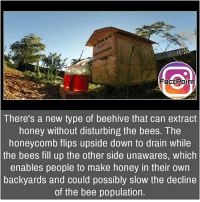 Follow our page for more Facts 😇 Don't forget to tag your friends 💖: Fact Point  There's a new type of beehive that can extract  honey without disturbing the bees. The  honeycomb flips upside down to drain while  the bees fill up the other side unawares, which  enables people to make honey in their own  backyards and could possibly slow the decline  of the bee population. Follow our page for more Facts 😇 Don't forget to tag your friends 💖
