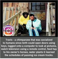 Horses, Memes, and Control: Fact Point  Travis a chimpanzee that was socialized  to humans since birth could open doors using  keys, logged onto a computer to look at pictures,  watch television using a remote control, feed hay  to his owner's horses, water plants learned  the schedules of passing ice cream trucks. That's awesome chimpanzee 😝