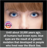 Follow our page for more Facts 😇 Don't forget to tag your friends 💖: Fact Point  Until about 10,000 years ago,  all humans had brown eyes, blue  eyes are the result of a genetic  mutation that developed in people  who lived near the Black Sea. Follow our page for more Facts 😇 Don't forget to tag your friends 💖