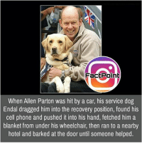 Memes, 🤖, and Page: Fact Point  When Allen Parton was hit by a car, his service dog  Endal dragged him into the recovery position, found his  cell phone and pushed it into his hand, fetched him a  blanket from under his wheelchair, then ran to a nearby  hotel and barked at the door until someone helped. Follow our page for more Facts 😇 Don't forget to tag your friends 💖
