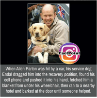 Wheelchair: Fact Point  When Allen Parton was hit by a car, his service dog  Endal dragged him into the recovery position, found his  cell phone and pushed it into his hand, fetched him a  blanket from under his wheelchair, then ran to a nearby  hotel and barked at the door until someone helped.