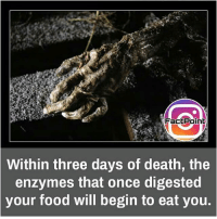 Facts, Food, and Friends: Fact Point  Within three days of death, the  enzymes that once digested  your food will begin to eat you. Follow our page for more Facts 😇 Don't forget to tag your friends 💖
