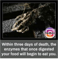 Food, Memes, and Death: Fact Point  Within three days of death, the  enzymes that once digested  your food will begin to eat you. It's scary but natural phenomenon 👍