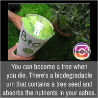 Follow our page for more Facts 😇 Don't forget to tag your friends 💖: Fact Point  You can become a tree when  you die. There's a biodegradable  urn that contains a tree seed and  absorbs the nutrients in your ashes. Follow our page for more Facts 😇 Don't forget to tag your friends 💖