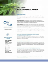 """Anaconda, Baked, and Dogs: FACT SHEET:  PETS AND MARIJUANA  WHAT IS MARIJUANA?  Recreational and most medical marijuana products are prepared using the Cannabis sativa  plant, usualy by drying its fowers and leaves. More than 100 chemicals, known as cannabinoids  come from the cannabis plant. Marijuana refers so products containing bioactive cannabinoid  Recreational marijuana, which is smoked, vaporized or baked into oral preparations for  humans, contains high levels of tetrahydeocannabinol (THC, which causes psychoactive effects  on the mind. This dass of marijuana has the highest risk for pes toxdicity  Medical marijuana contains moderate to high levels of cannabidiol (CBD), a non-psychoactive  cannabinold compound and lower levels of THC These medicinal products may be presonibed  to human patients for antinausea pain relief and other medical reasons. Some of these products  contain enough THC to produce toxdicity in pets.  ONTARIO VETERINARY  MEDICAL ASSOCIATION  Your Source. Your Voice.  Cannabis that contains very low levels (less than 03 per cent) of THC in its flowers and leaves is  dassiied as hemp. This tends to be most used for """"medicinal purposes for pets, with peoducts  ncluding hemp oil, tincture or hemp powder, Effective and safe dosages of hemp products have  not been studied  CAN MY VETERINARIAN PRESCRIBE MARIJUANA PRODUCTS  OR MEDICAL MARIJUANA TO MY PET?  SIGNS OF MARIJUANA  TOXICITY  No. Veterinarians are not allowed to prescribe any of these peoducts to pets in addition, there  are cumently no CBD products approved by Health Canada and thenefore no legal pathway for  veterinaians to obtain these products  Lack of balance and  IS MARIJUANA SAFE FOR MY PET?  Fatigue or weakness  Excessive salivation  Vomiting  No.Studies shows that dogs have a higher sensitivity to cannabinoids than people. Given the  insufficient research segarding dosage, frequency of administration and side effects, pet owners  should not give their pets any type of manjuana """