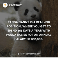 Memes, Super Mario, and Mario: FACTBOLT  PANDA NANNY IS A REAL JOB  POSITION, WHERE YOU GET TO  SPEND 365 DAYS A YEAR WITH  PANDA BABIES FOR AN ANNUAL  SALARY OF $32,000.  FACTS & ENTERTAINMENT 🖐 Tag friends! I'm so getting this job! — 🔴 Play Super Mario Run beta version Free before anyone, install from 👉 @FreeMarioRun's Bio Link! — fact factbolt