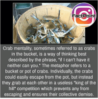 """Wohhaaaaa 😜 did you know fact point , education amazing dyk unknown facts daily facts💯 didyouknow follow follow4follow earth science commonsense f4f factpoint instafact awesome world worldfacts like like4ike tag friends Don't forget to tag your friends 👍: FactPoinb  Crab mentality, sometimes referred to as crabs  in the bucket, is a way of thinking best  described by the phrase, """"if I can't have it  neither can you."""" The metaphor refers toa  bucket or pot of crabs. Individually, the crabs  could easily escape from the pot, but instead  they grab at each other in a useless """"king of the  hill"""" competition which prevents any from  escaping and ensures their collective demise Wohhaaaaa 😜 did you know fact point , education amazing dyk unknown facts daily facts💯 didyouknow follow follow4follow earth science commonsense f4f factpoint instafact awesome world worldfacts like like4ike tag friends Don't forget to tag your friends 👍"""