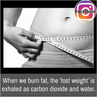 Facts, Friends, and Memes: FactPoinb  When we burn fat, the 'lost weight' is  exhaled as carbon dioxide and water. We're made up of 70% with water 😜 did you know fact point , education amazing dyk unknown facts daily facts💯 didyouknow follow follow4follow earth science commonsense f4f factpoint instafact awesome world worldfacts like like4ike tag friends Don't forget to tag your friends 👍