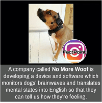 Memes, 🤖, and Page: FactPoint  A company called No More Woof is  developing a device and software which  monitors dogs' brainwaves and translates  mental states into English so that they  can tell us how they're feeling. Follow our page for more Facts 😇 Don't forget to tag your friends 💖