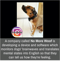 That'd be great to know , what they wants 😜 did you know fact point , education amazing dyk unknown facts daily facts💯 didyouknow follow follow4follow earth science commonsense f4f factpoint instafact awesome world worldfacts like like4ike tag friends Don't forget to tag your friends 👍: FactPoint  A company called No More Woof is  developing a device and software which  monitors dogs' brainwaves and translates  mental states into English so that they  can tell us how they're feeling. That'd be great to know , what they wants 😜 did you know fact point , education amazing dyk unknown facts daily facts💯 didyouknow follow follow4follow earth science commonsense f4f factpoint instafact awesome world worldfacts like like4ike tag friends Don't forget to tag your friends 👍