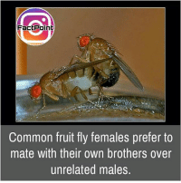 Facts, Friends, and Huh: FactPoint  Common fruit fly females prefer to  mate with their own brothers over  unrelated males Huh 😓 did you know fact point , education amazing dyk unknown facts daily facts💯 didyouknow follow follow4follow earth science commonsense f4f factpoint instafact awesome world worldfacts like like4ike tag friends Don't forget to tag your friends 👍