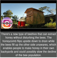 Facts, Friends, and Memes: FactPoint  ctP  There's a new type of beehive that can extract  honey without disturbing the bees. The  honeycomb flips upside down to drain while  the bees fill up the other side unawares, which  enables people to make honey in their own  backyards and could possibly slow the decline  of the bee population. That's theft 😜 did you know fact point , education amazing dyk unknown facts daily facts💯 didyouknow follow follow4follow earth science commonsense f4f factpoint instafact awesome world worldfacts like like4ike tag friends Don't forget to tag your friends 👍