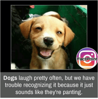 Notice it sometime 😯 did you know fact point , education amazing dyk unknown facts daily facts💯 didyouknow follow follow4follow earth science commonsense f4f factpoint instafact awesome world worldfacts like like4ike tag friends Don't forget to tag your friends 👍: FactPoint  Dogs laugh pretty often, but we have  trouble recognizing it because it just  sounds like they re panting Notice it sometime 😯 did you know fact point , education amazing dyk unknown facts daily facts💯 didyouknow follow follow4follow earth science commonsense f4f factpoint instafact awesome world worldfacts like like4ike tag friends Don't forget to tag your friends 👍