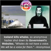 """cnn.com, Love, and Memes: FactPoint  lceland kills whales, so anonymous  hacker shut down its Government's  Websites. """"Whales do not have a voice.  We will be a voice for them."""" - Anonymous voices of the voiceless.. ---------- Anonymous Army_anons System Revolution CNN News Education OpenMind Corruption CorruptedGoverment Society Activism Hacktivist FreePalestine NoChildinWar War Politics freedom Love WeAreAnonymous WeAreLegion syrianhamster syrian Yemen EndTheOccupation Israel"""