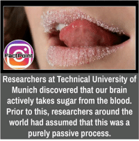 did you know fact point , education amazing dyk unknown facts daily facts💯 didyouknow follow follow4follow f4f factpoint instafact awesome world worldfacts like like4ike tag friends Don't forget to tag your friends 🤘: FactPoint  Researchers at Technical University of  Munich discovered that our brain  actively takes sugar from the blood.  Prior to this, researchers around the  world had assumed that this was a  purely passive process. did you know fact point , education amazing dyk unknown facts daily facts💯 didyouknow follow follow4follow f4f factpoint instafact awesome world worldfacts like like4ike tag friends Don't forget to tag your friends 🤘