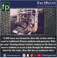 Memes, Bear, and Bears: FactPoint  source: factpoint.net  12,000 bears are farmed for their bile in Asia which is  used in traditional Chinese medicine and generates $2bn  per year. Farming always involves surgery on the bears to  insert a catheter or to cut a hole through the abdomen by  which the bile leaks. Bear bile has no medicinal effect.