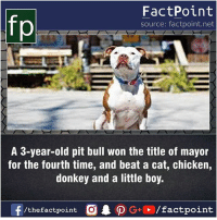 Fact sources mentioned at www.FactPoint.net- did you know fact point , education amazing dyk unknown facts daily facts💯 didyouknow follow follow4follow earth science commonsense f4f factpoint instafact awesome world worldfacts like like4ike tag friends Don't forget to tag your friends 👍: FactPoint  source: factpoint.net  A 3-year-old pit bull won the title of mayor  for the fourth time, and beat a cat, chicken,  donkey and a little boy.  f/thefactpoint  G+/factpoint Fact sources mentioned at www.FactPoint.net- did you know fact point , education amazing dyk unknown facts daily facts💯 didyouknow follow follow4follow earth science commonsense f4f factpoint instafact awesome world worldfacts like like4ike tag friends Don't forget to tag your friends 👍