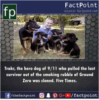 Brave dog 🐕: FactPoint  source: factpoint.net  Trakr, the hero dog of 9/11 who pulled the last  survivor out of the smoking rubble of Ground  Zero was cloned. Five Times.  f/thefactpoint O G/factpoint Brave dog 🐕