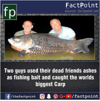 Fact sources mentioned at www.FactPoint.net- did you know fact point , education amazing dyk unknown facts daily facts💯 didyouknow follow follow4follow earth science commonsense f4f factpoint instafact awesome world worldfacts like like4ike tag friends Don't forget to tag your friends 👍: FactPoint  source: factpoint.net  Two guys used their dead friends ashes  as fishing bait and caught the worlds  biggest Carp  f/thefactpoint  G+/factpoint Fact sources mentioned at www.FactPoint.net- did you know fact point , education amazing dyk unknown facts daily facts💯 didyouknow follow follow4follow earth science commonsense f4f factpoint instafact awesome world worldfacts like like4ike tag friends Don't forget to tag your friends 👍