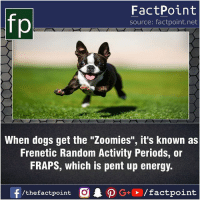"Fact sources mentioned at www.FactPoint.net- did you know fact point , education amazing dyk unknown facts daily facts💯 didyouknow follow follow4follow earth science commonsense f4f factpoint instafact awesome world worldfacts like like4ike tag friends Don't forget to tag your friends 👍: FactPoint  source: factpoint.net  When dogs get the ""Zoomies"", it's known as  Frenetic Random Activity Periods, or  FRAPS, which is pent up energy.  f/thefactpoint  G+/factpoint Fact sources mentioned at www.FactPoint.net- did you know fact point , education amazing dyk unknown facts daily facts💯 didyouknow follow follow4follow earth science commonsense f4f factpoint instafact awesome world worldfacts like like4ike tag friends Don't forget to tag your friends 👍"