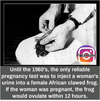 Thats crazy 😐 did you know fact point , education amazing dyk unknown facts daily facts💯 didyouknow follow follow4follow earth science commonsense f4f factpoint instafact awesome world worldfacts like like4ike tag friends Don't forget to tag your friends 👍: FactPoint  Until the 1960's, the only reliable  pregnancy test was to inject a woman's  urine into a female African clawed frog.  If the woman was pregnant, the frog  would ovulate within 12 hours. Thats crazy 😐 did you know fact point , education amazing dyk unknown facts daily facts💯 didyouknow follow follow4follow earth science commonsense f4f factpoint instafact awesome world worldfacts like like4ike tag friends Don't forget to tag your friends 👍