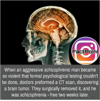 Facts, Friends, and Memes: FactPoint  When an aggressive schizophrenic man became  so violent that formal psychological testing couldn't  be done, doctors preformed a CT scan, discovering  a brain tumor. They surgically removed it, and he  was schizophrenia - free two weeks later. That's nice 👍 did you know fact point , education amazing dyk unknown facts daily facts💯 didyouknow follow follow4follow earth science commonsense f4f factpoint instafact awesome world worldfacts like like4ike tag friends Don't forget to tag your friends 👍