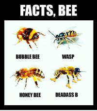 FACTS, BEE  WASP  BUBBLE BEE  DEADASS B  HONEY BEE All facts my guy 😂😂😭😂