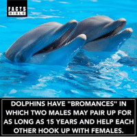 "Follow our other account @factsbible for more amazing facts 😱: FACTS  BIBLE  BIBL E  DOLPHINS HAVE ""BROMANCES"" IN  WHICH TWO MALES MAY PAIR UP FOR  AS LONG AS 15 YEARS AND HELP EACH  OTHER HOOK UP WITH FEMALES. Follow our other account @factsbible for more amazing facts 😱"