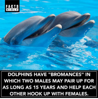 "Tag you bro 👊: FACTS  BIBLE  BIBL E  DOLPHINS HAVE ""BROMANCES"" IN  WHICH TWO MALES MAY PAIR UP FOR  AS LONG AS 15 YEARS AND HELP EACH  OTHER HOOK UP WITH FEMALES. Tag you bro 👊"