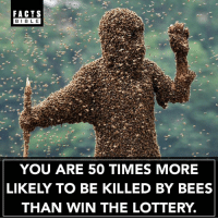 Wow 👀😱: FACTS  BIBLE  BIBL E  YOU ARE 50 TIMES MORE  LIKELY TO BE KILLED BY BEES  THAN WIN THE LOTTERY. Wow 👀😱