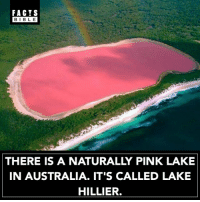 Facts, Memes, and Australia: FACTS  BIBLE  BIBLE  THERE IS A NATURALLY PINK LAKE  IN AUSTRALIA. IT'S CALLED LAKE  HILLIER. The Hillier Lake was first discovered in 1802 by navigator and cartographer Matthew Flinders who took samples from the lake and mentioned its existence in his journal.