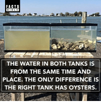 Crazy, Facts, and Memes: FACTS  BLE  THE WATER IN BOTH TANKS IS  FROM THE SAME TIME AND  PLACE. THE ONLY DIFFERENCE IS  THE RIGHT TANK HAS OYSTERS. Crazy... 👀