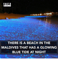 The mesmerizing shining water looks like a mirror, that reflects the sparkling stars above. However, the secret is this: phytoplankton – the marine microbes – are bioluminescent and emanate the blue glow. The species create the most amazing natural lighting in the world.: FACTS  BLE  THERE IS A BEACH IN THE  MALDIVES THAT HAS A GLOWING  BLUE TIDE AT NIGHT The mesmerizing shining water looks like a mirror, that reflects the sparkling stars above. However, the secret is this: phytoplankton – the marine microbes – are bioluminescent and emanate the blue glow. The species create the most amazing natural lighting in the world.