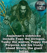 Facts, Memes, and Giant: FACTS  CENIC  Aquaman's sidekicks  include Topo the octopus,  Tusky the walrus, Poppy the  Porpoise and his trusty  steed Strom, the giant  horse dccomics dcuniverse dcentertianment dcevents dccinematicuniverse justiceleague justiceleaguethroneofatlantis aquaman kingofatlantis dcfacts factsofcomics like4like commentforcomment