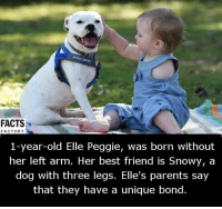 Memes, 🤖, and Bond: FACTS  FACTORY  1-year-old Elle Peggie, was born without  her left arm. Her best friend is Snowy, a  dog with three legs. Elle's parents say  that they have a unique bond