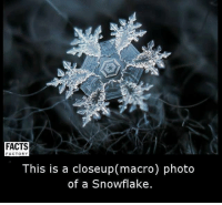 closeup: FACTS  FACTORY  This is a closeup macro) photo  of a Snowflake.