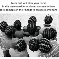 Africa, Braids, and Facts: Facts that will blow your mind:  Braids were used for enslaved women to draw  (braid) maps on their heads to escape plantations  Qafrokingdom DID YOU KNOW CORNROWS WERE USED AS MAPS FOR ESCAPED FORMERLY ENSLAVED AFRICANS. San Basilio de Palenque is a village in Northern Colombia about 50 miles East of Cartagena with a population of around 3,500 people. San Basilio de Palenque is one of several walled cities that were started by escaped slaves in the 17th century. The city was set up as a refuge for escaped slaves by escaped slave Benkos Bioho, it is also the only city that has survived and is still inhabited today. The people who live here now are mainly Afro-Colombians which are direct descendants of African slaves brought by the Spanish during the Colonization of the Americas. Benkos Bioho was born in Africa and claimed to have been a king there. Captured in Africa by the Portuguese and sold several times until being sold to a Spaniard in Cartagena. Benkos Bioho tried to escape several times before he finally succeeded. After his escape he formed a town with others that freed themselves. There they developed their own language called Palenquero. The language is influenced by the Kikongo language of Congo and Angola and also by Portuguese. He also formed an army and an intelligence network to help organize the escape of other slaves and to guide them to the liberated areas. One of the things he did was have the women shape maps in their cornrows. They were also used as symbols to deliver messages. Bioho also had the women collect seeds and put them in their hair as decoration. Later the seeds would be passed on to the village so they could start to grow their own crops. He was later called King Benkos grew his army of Maroons (African refugees who escaped slavery in the Americas and formed independent settlements). His army of Maroons started raiding Spanish plantations, farms, and ranches. King Benkos also had spies that alerted him to the movements of his enemies and because of this he was never defeated. Unable to defeat King Benkos and the Maroons the Spanish Governor of Cartengena offered a peace treaty. The peace deal was finalized but a few years later was called off after the Spanish discovered a plot King Benkos was organizing against them. The Spaniards captured Benkos & 👇🏾