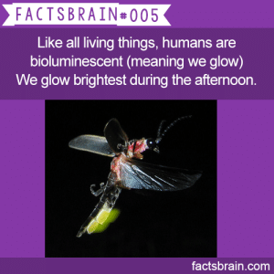 "natsulasommer:  prettyinpwn:  natsulasommer:  hikikotaku:  hikikotaku:  hikikotaku:  factsbrain:  Like all living things, humans are bio­luminescent (meaning we glow) – We glow brightest during the afternoon. - weird, interesting  funny facts  what  i've been staring at this for like 5 minutes. so.. what. i don't think people glow. but this is telling me that we actually emit visible light.. especially in the afternoon?? am i reading this right or what  ""all living things"" plants. when do the plants glow  science side of tumblr pls  I'm not from the science side of tumblr, but here's the answer anyways:  Basically, all living things are bioluminescent because every living thing has chemical reactions occurring in their cells. The energy created from these chemical reactions physically manifests as light, thus… all living things naturally glow.  However, this glow cannot be seen by the human eye. In fact, the only way they've ever captured this light is through special cameras. Using these ultra special cameras, they've imaged subjects' bodies over 24 hour periods. It has been found out that humans emit the most of this glow during the afternoon (about 4 PM), it is the weakest in the morning (about 10 AM), and the brightest light is emitted from the cheeks, neck, and forehead. The light is about a thousand times weaker than what humans can perceive.  Basically, it's a side effect of metabolic reactions. It's been suspected that humans are bioluminescent for years, but they weren't able to confirm it until recently thanks to technology and a man named Masaki Kobayashi from the Tohoku Institute of Technology.  Sources: http://scienceblogs.com/notrocketscience/2009/07/20/photographing-the-glow-of-the-human-body/ http://www.theguardian.com/science/blog/2009/jul/17/human-bioluminescence http://www.livescience.com/7799-strange-humans-glow-visible-light.html  10/10 explaination 10/10 source 10/10 time to answer overall 10/10 you are now offiicially from the science side of tumblr. and thank you : FACTSBRAIN#005  Like all living things, humans are  bioluminescent (meaning we glow)  We glow brightest during the afternoon  es  factsbrain.com natsulasommer:  prettyinpwn:  natsulasommer:  hikikotaku:  hikikotaku:  hikikotaku:  factsbrain:  Like all living things, humans are bio­luminescent (meaning we glow) – We glow brightest during the afternoon. - weird, interesting  funny facts  what  i've been staring at this for like 5 minutes. so.. what. i don't think people glow. but this is telling me that we actually emit visible light.. especially in the afternoon?? am i reading this right or what  ""all living things"" plants. when do the plants glow  science side of tumblr pls  I'm not from the science side of tumblr, but here's the answer anyways:  Basically, all living things are bioluminescent because every living thing has chemical reactions occurring in their cells. The energy created from these chemical reactions physically manifests as light, thus… all living things naturally glow.  However, this glow cannot be seen by the human eye. In fact, the only way they've ever captured this light is through special cameras. Using these ultra special cameras, they've imaged subjects' bodies over 24 hour periods. It has been found out that humans emit the most of this glow during the afternoon (about 4 PM), it is the weakest in the morning (about 10 AM), and the brightest light is emitted from the cheeks, neck, and forehead. The light is about a thousand times weaker than what humans can perceive.  Basically, it's a side effect of metabolic reactions. It's been suspected that humans are bioluminescent for years, but they weren't able to confirm it until recently thanks to technology and a man named Masaki Kobayashi from the Tohoku Institute of Technology.  Sources: http://scienceblogs.com/notrocketscience/2009/07/20/photographing-the-glow-of-the-human-body/ http://www.theguardian.com/science/blog/2009/jul/17/human-bioluminescence http://www.livescience.com/7799-strange-humans-glow-visible-light.html  10/10 explaination 10/10 source 10/10 time to answer overall 10/10 you are now offiicially from the science side of tumblr. and thank you"