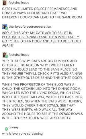 Cats, Hungry, and Blog: factsinallcaps  CATS HAVE LIMITED OBJECT PERMANENCE AND  DON'T ALWAYS UNDERSTAND THAT TWO  DIFFERENT DOORS CAN LEAD TO THE SAME ROOM  thankyouforyourcooperation  #SO IS THIS WHY MY CATS ASK TO BE LET IN  BECAUSE IT'S RAINING #AND THEN IMMEDIATELY  GO TO THE OTHER DOOR AND ASK TO BE LET OUT  AGAIN?  factsinallcaps  YUP, THAT'S WHY. CATS ARE BIG DUMMIES AND  OFTEN SEE NO REASON WHY TWO DIFFERENT  DOORS SHOULD LEAD TO THE SAME PLACE, SO  THEY FIGURE THEY'LL CHECK IF IT'S ALSO RAINING  IN THE OTHER OUTSIDE BEHIND THE OTHER DOOR  WHEN THE PROPRIETOR OF THIS BLOG WASA  CHILD, THE KITCHEN LED INTO THE DINING ROOM,  WHICH LED INTO THE LIVING ROOM, WHICH LEAD  INTO THE FRONT HALLWAY, WHICH LED BACK INTOO  THE KITCHEN, SO WHEN THE CATS WERE HUNGRY,  THEY WOULD CHECK THEIR BOWLS, SEE THAT  THEY WERE EMPTY, AND WALK ALL THE WAY  AROUND THE HOUSE TO SEE IF THE OTHER BOWLS  IN THE OTHER KITCHEN WERE ALSO EMPTY  doomy  why is everyone screaming Hanlons razor