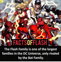 Batman, Facts, and Family: FACTSOFFLASH  The Flash Family is one of the largest  families in the DC Universe, only rivaled  by the Bat Family. ⚡️⚡️ - The Flash Family! - (putting old facts in the new layout) - My other IG Accounts @facts_of_heroes @webslingerfacts @yourpoketrivia ⠀⠀⠀⠀⠀⠀⠀⠀⠀⠀⠀⠀⠀⠀⠀⠀⠀⠀⠀⠀⠀⠀⠀⠀⠀⠀⠀⠀⠀⠀⠀⠀⠀⠀ ⠀⠀------------------------ blackflash lindapark batman johnfox maxmercury impulse inertia professorzoom danielwest godspeed savitar flashcw theflash hunterzolomon therogues flashcw justiceleague wallywest eobardthawne grantgustin ezramiller like4like batmanvsuperman bartallen zoom flash barryallen youngjustice jaygarrick