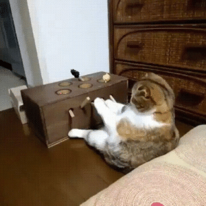 Internet, Tumblr, and Work: failnation:  An internet data security manager is seen hard at work