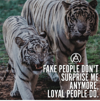 Tag someone loyal to you 👇 - DOUBLE TAP IF YOU AGREE!: FAKE AMBITION  DON'T  SURPRISE ME  ANYMORE  LOYAL PEOPLE DO. Tag someone loyal to you 👇 - DOUBLE TAP IF YOU AGREE!