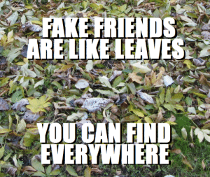 Fake, Friends, and Real Friends: FAKE FRIENDS  ARE LIKE LEAVES  YOU CAN FIND  EVERYWHERE Can't wait to meet my real friends in the Sahara Desert then.