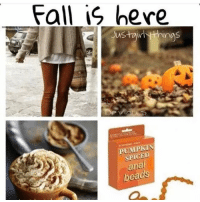 Who all ready?😂 @fatwhitecatholic: Fall is here  Justairi thin  PUMPKIN  SPICED  iel  a  beads  S Who all ready?😂 @fatwhitecatholic